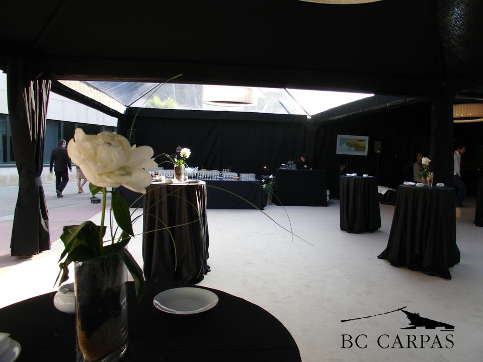 Carpas negras y transparentes bc carpas for Carpa koi negra