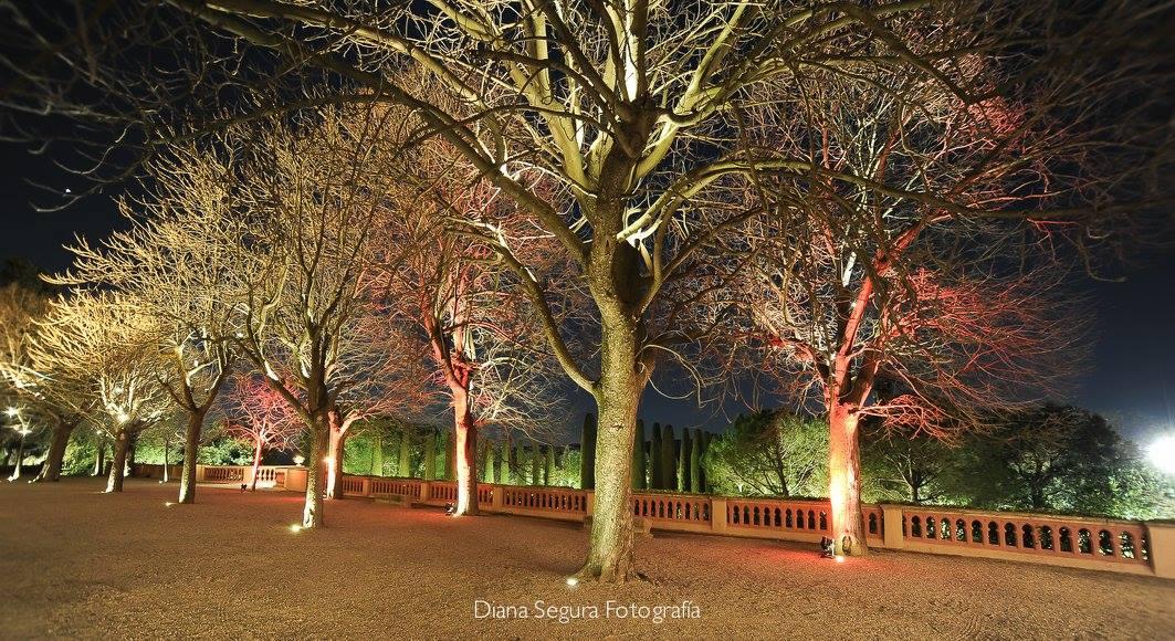 Una boda de invierno con carpa blanca bc carpas for Iluminacion arboles jardin