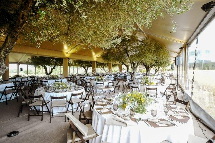 Una boda en el campo con olivos debajo de la carpa